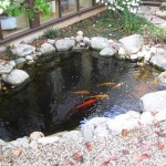 beautiful relaxing pond at chiro