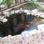 beautiful relaxing pond at chiro