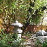 bamboo scenery at chiropractor office